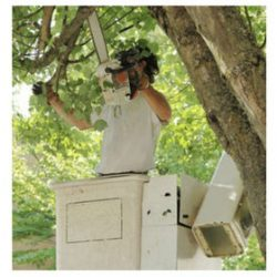 tree services New Orleans10